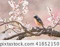 조류, 새, 들새 41652150