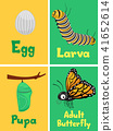 Monarch Butterfly Cycle Flash Cards Illustration 41652614