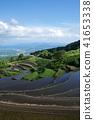 terraced, rice-fields, rice 41653338