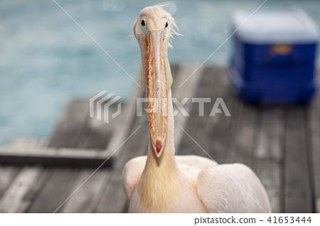 조류, 새, 들새 41653444