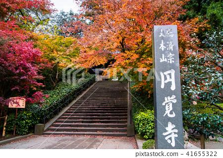 鎌倉Engakuji寺的秋葉 41655322