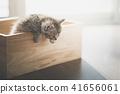 Cute kitten playig in a wooden box under sunlight 41656061