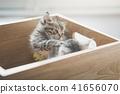 animal, box, cat 41656070