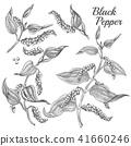 pepper, black, plant 41660246