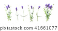 Floral banner flat lay Lavender flowers 41661077