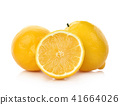 lemon isolated on white background 41664026