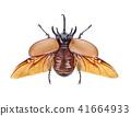 Rhinoceros beetle, Rhino beetle, Unicorn beetle 41664933