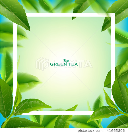 Green tea leaves vector nature background. 41665806
