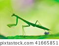 사마귀, 벌레, 곤충 41665851