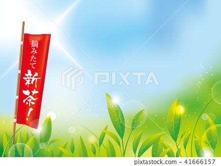 新鮮採摘的新鮮茶!茶場和上升的旗幟 41666157