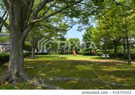 타카시 공원의 신록 41670302