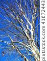 ต้นไม้,ท้องฟ้าเป็นสีฟ้า,ท้องฟ้า 41672443
