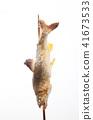 은어, 소금구이, 민물고기 41673533
