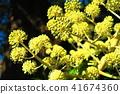 ดอกไม้,ไม้,โรงงาน 41674360