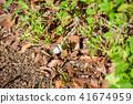 나비, 곤충, 벌레 41674959