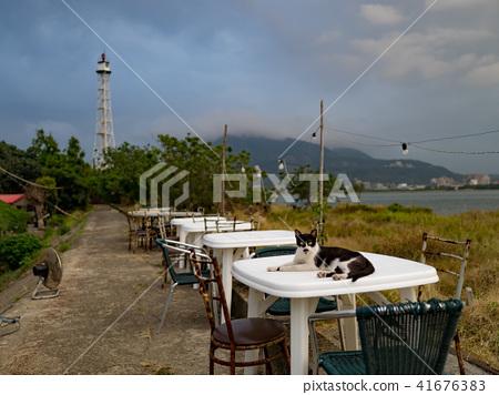 戶外餐桌上的貓 41676383
