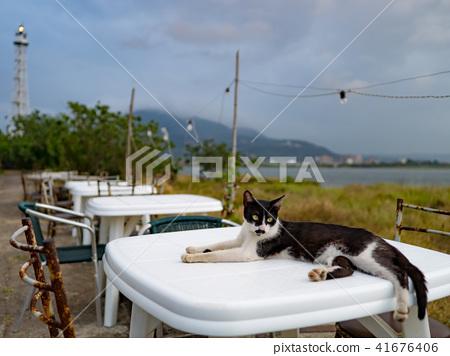 戶外餐桌上的貓 41676406