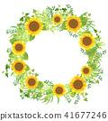 sunflower, sunflowers, lease 41677246