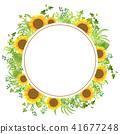 sunflower, sunflowers, frame 41677248