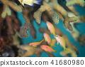 바닷물고기, 물고기, 생선 41680980