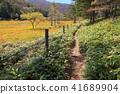ฤดูใบไม้ร่วง owara มัวร์ (Oshara Hara) 41689904