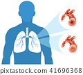 Human Lung on White Background 41696368