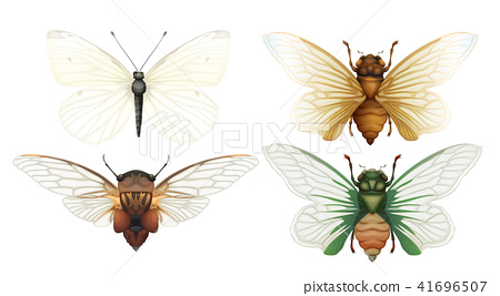 Cicada Insect Vector on White Background 41696507
