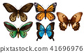 butterfly colourful set 41696976