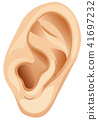 A Human Ear on White Background 41697232