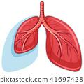肺部 健康 肺 41697428