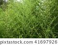 잎, 이파리, 잎사귀 41697926
