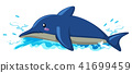 Floating Dolphin on White Background 41699459