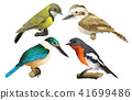 A Set of Birds on White Background 41699486