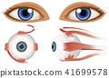 Human Anatomy of Eyeball 41699578