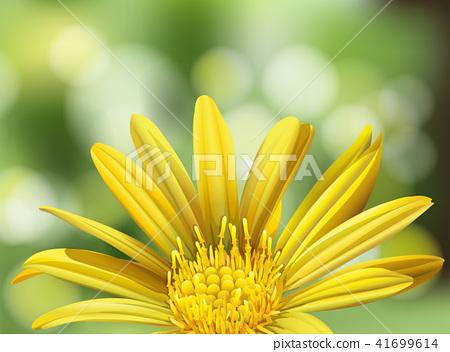 A Beautiful Yellow Daisy on Nature Background 41699614