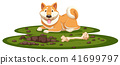 A Shiba Dog on White Background 41699797