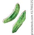 야채, 채소, 수채화 41700225