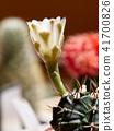 선인장, 꽃, 화초 41700826