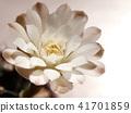 선인장, 꽃, 화초 41701859