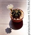 선인장, 꽃, 화초 41701862