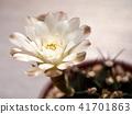 선인장, 꽃, 화초 41701863