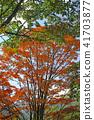 "Norikura Highlands Ichinose garden ""Maei no Ike"" maple 41703877"