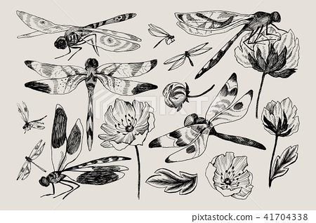 Big set of vector floral elements with black and white hand drawn herbs, wildflowers and dragonfly 41704338