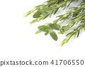rosemary, herb, herbal 41706550