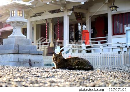 Cat sitting in the shrine's shrine 41707193