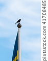 Blackbird on the top of a flag pole 41708485