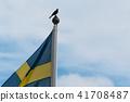 The swedish national bird, blackbird 41708487