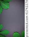 green, leaves, chestnut 41742270