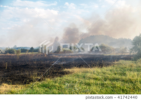 Forest wildfire. Burning field of dry grass and trees. Heavy smoke against blue sky. Wild fire due 41742440