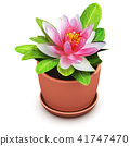 Red house flower in pot 41747470